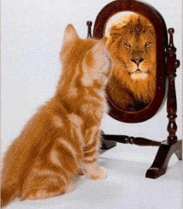 Looking at the cat in the mirror
